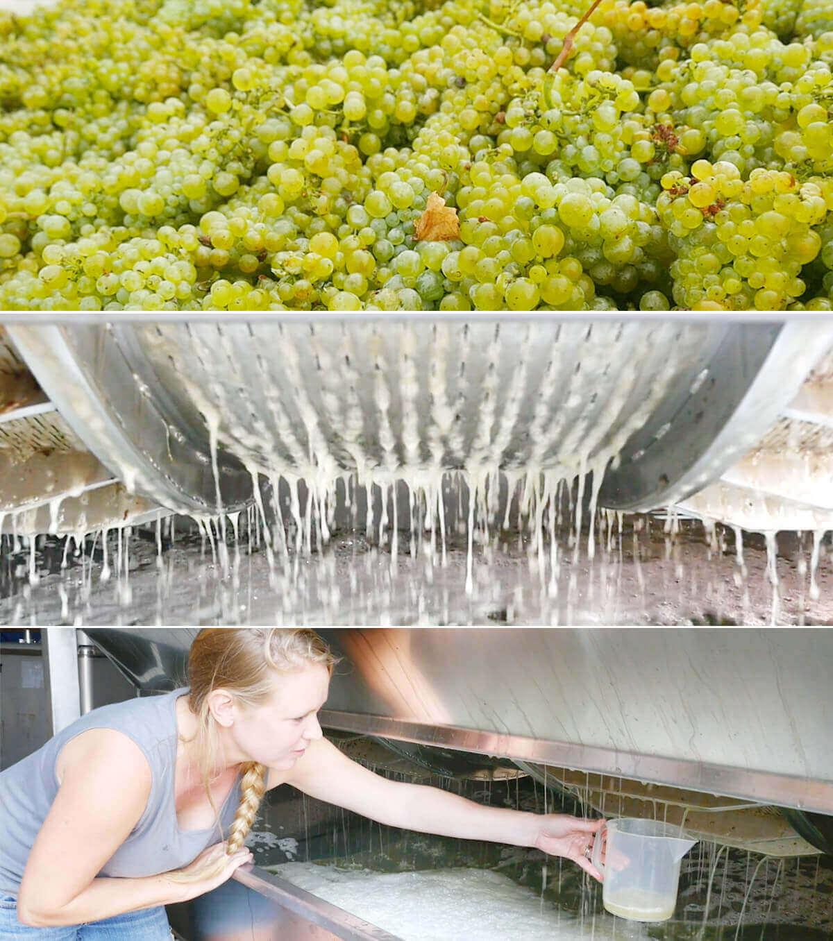 Proces mycia winogron